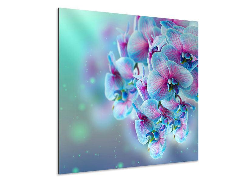 Aluminiumbild Farbige Orchideen