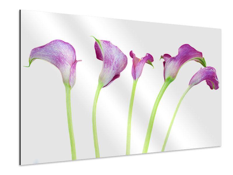 Aluminiumbild Callas in Lila
