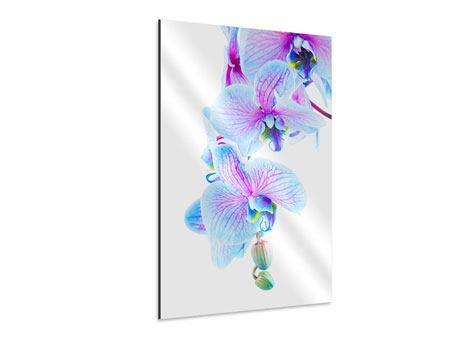Aluminiumbild Orchideen-Schmetterling
