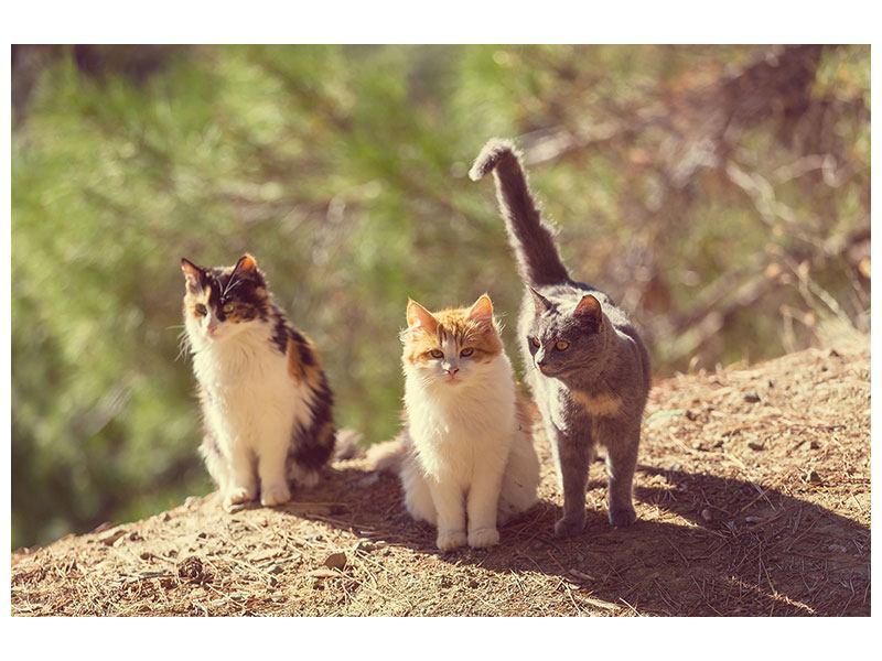 Aluminiumbild Katzen im Garten