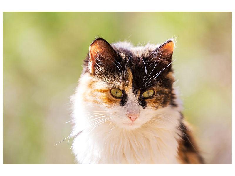 Aluminiumbild Katzenbesuch