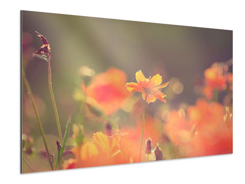 Aluminiumbild Blütenpracht