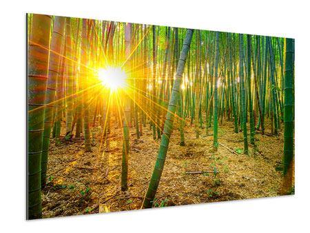 Aluminiumbild Bambusse