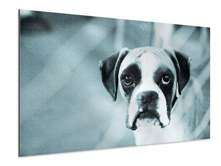 Aluminiumbild Boxer