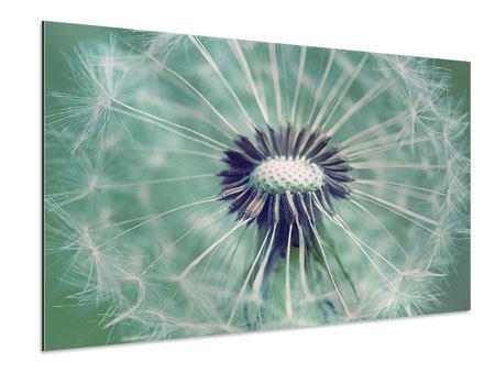 Aluminiumbild Close Up Pusteblume