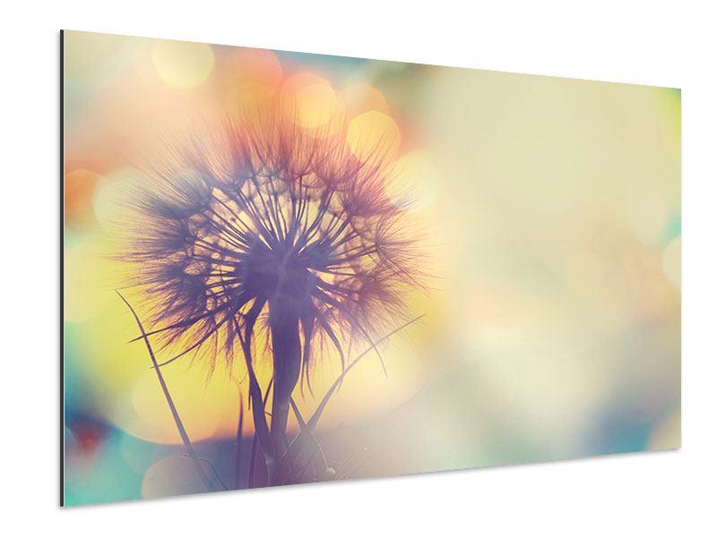 Aluminiumbild Die Pusteblume im Licht