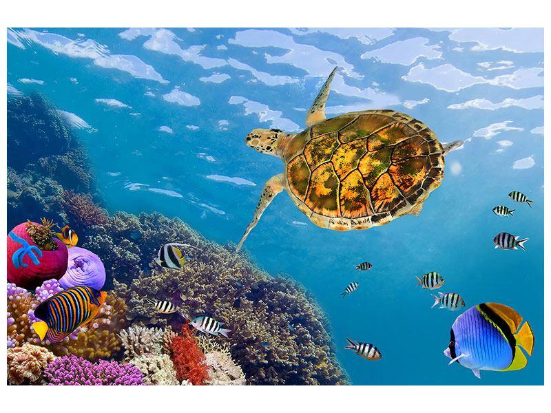 Aluminiumbild Die Wasserschildkröte