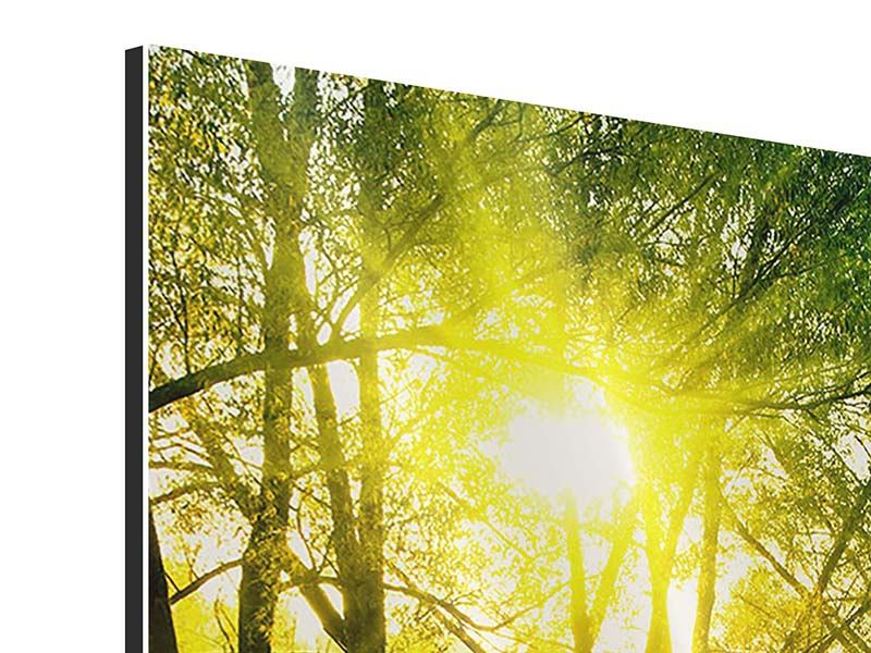 Aluminiumbild Waldweg im Sonnenlicht