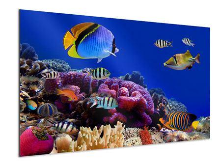 Aluminiumbild Welt der Fische