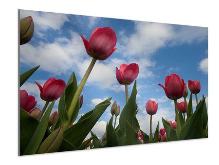 Aluminiumbild Tulpen im Himmel