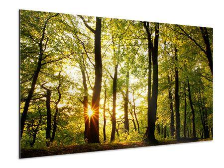 Aluminiumbild Sonnenuntergang zwischen den Bäumen