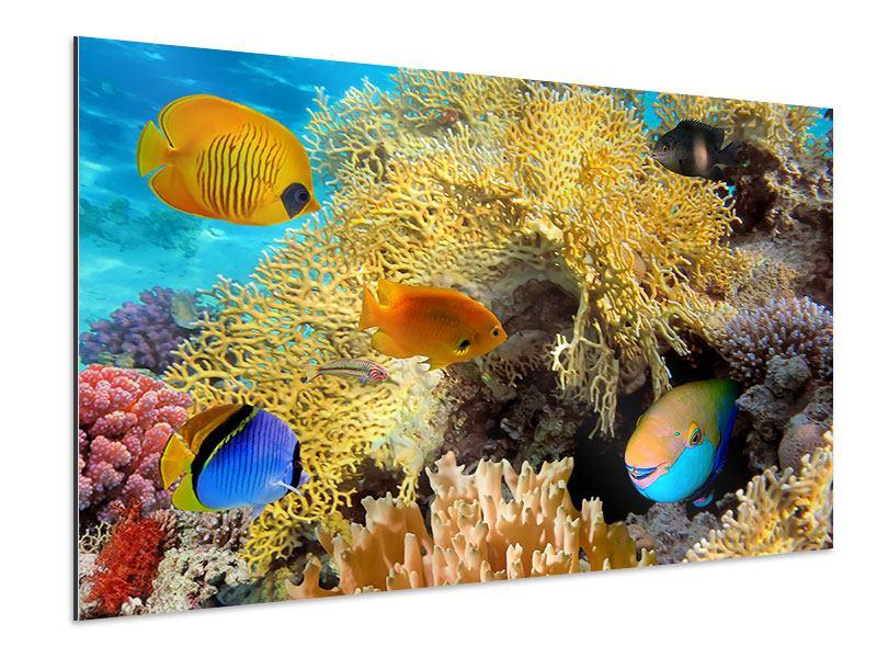 Aluminiumbild Fischreichtum