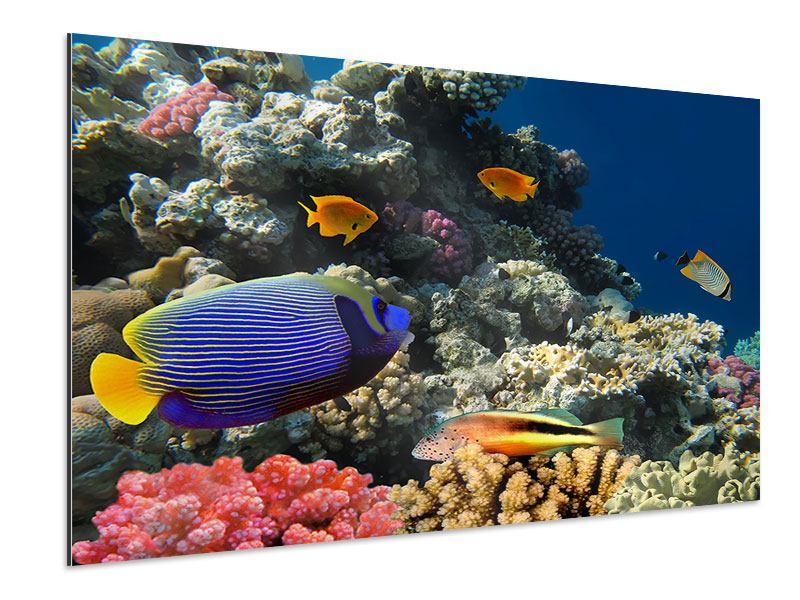 Aluminiumbild Das Aquarium