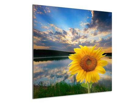 Aluminiumbild Sonnenblume am See