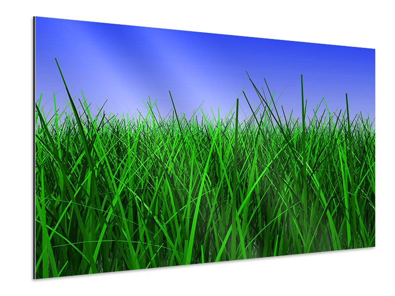 Aluminiumbild Im Gras