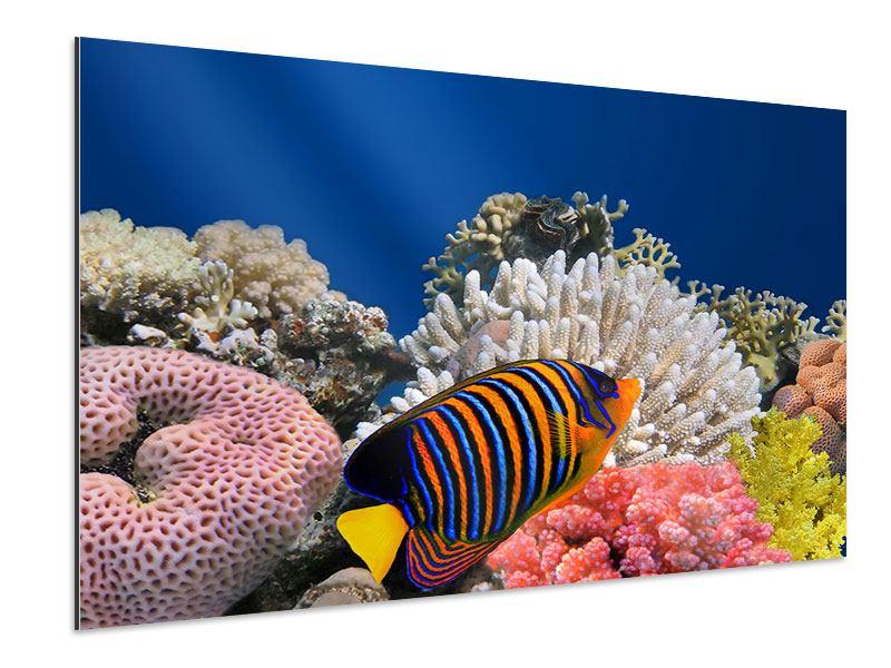 Aluminiumbild Mit den Fischen tauchen