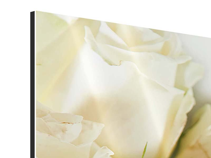 Aluminiumbild Weisse Rosen