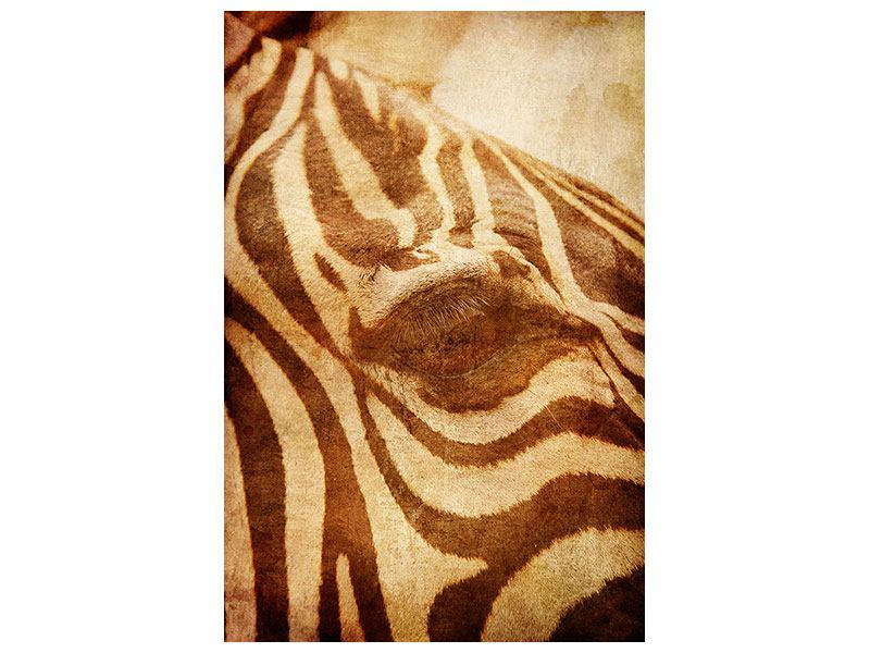 Aluminiumbild Zebra Close Up