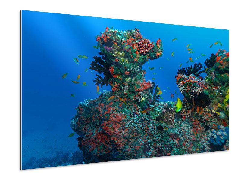 Aluminiumbild Die Welt der Fische