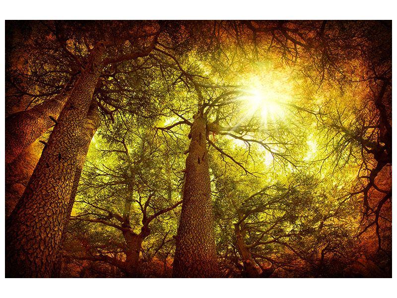 Aluminiumbild Cedar Baum