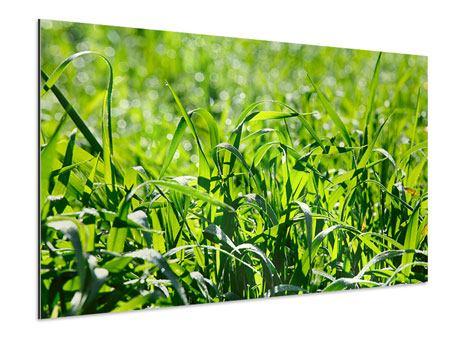 Aluminiumbild Sonniges Gras