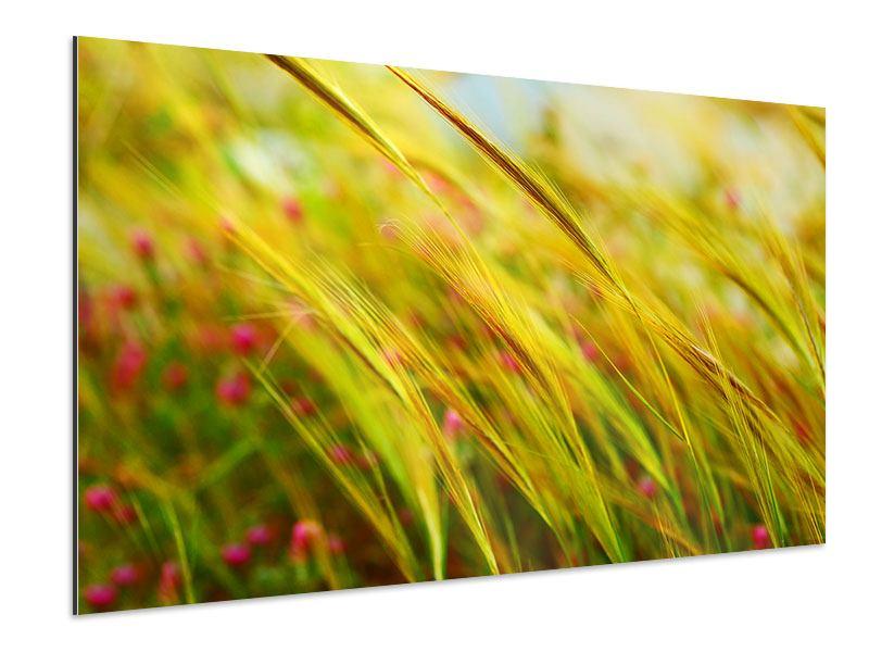 Aluminiumbild Das Weizenfeld