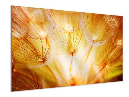 Aluminiumbild Close Up Pusteblume im Licht