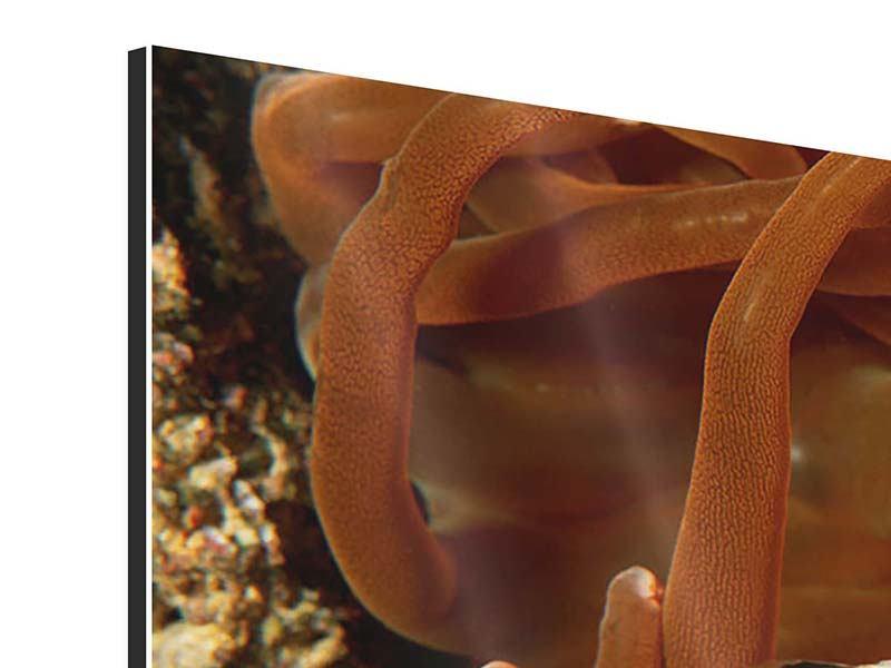 Aluminiumbild Nemo