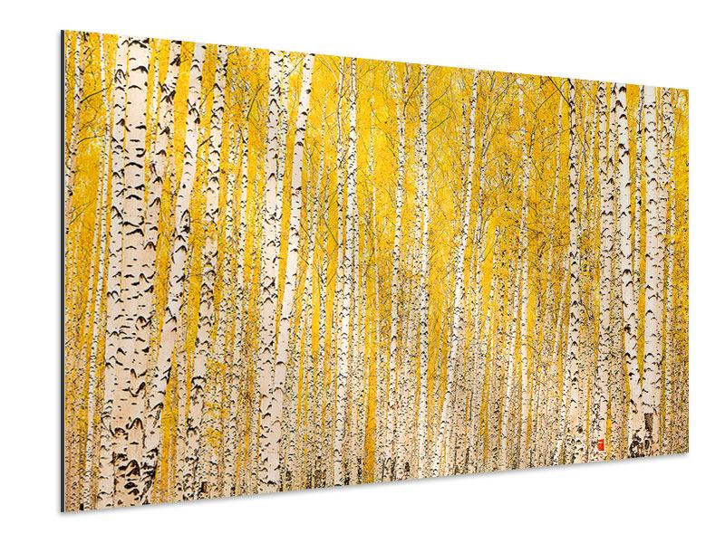 Aluminiumbild Der Birkenwald im Herbst