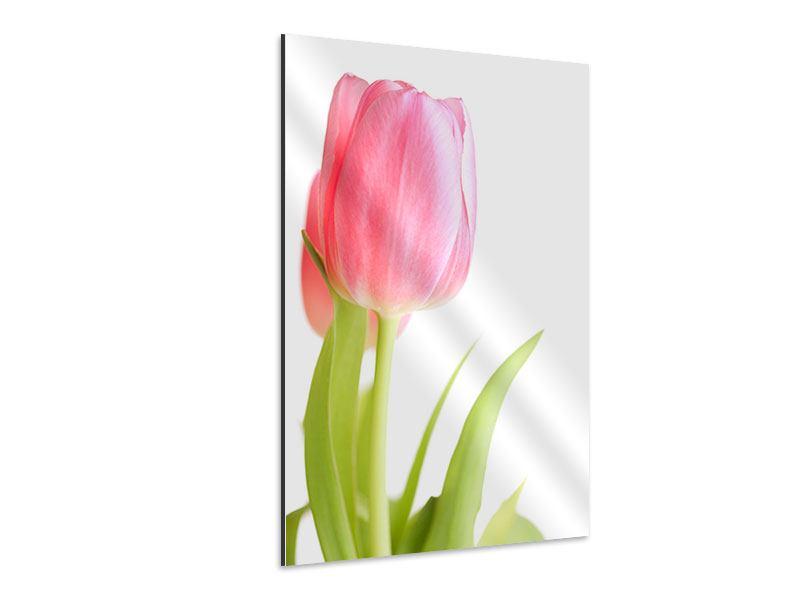 Aluminiumbild XXL Tulpe