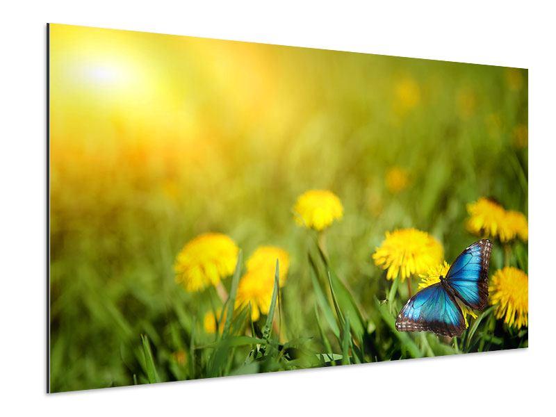 Aluminiumbild Der Löwenzahn und der Schmetterling