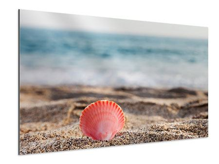 Aluminiumbild Die Muschel
