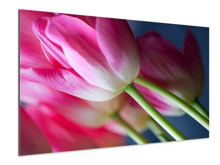 Aluminiumbild Makro Tulpen