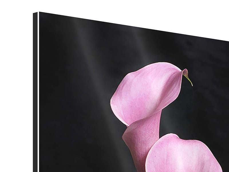 Aluminiumbild 3 Lila-Callas