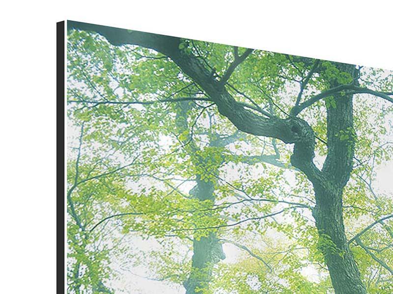 Aluminiumbild Der alte Baum