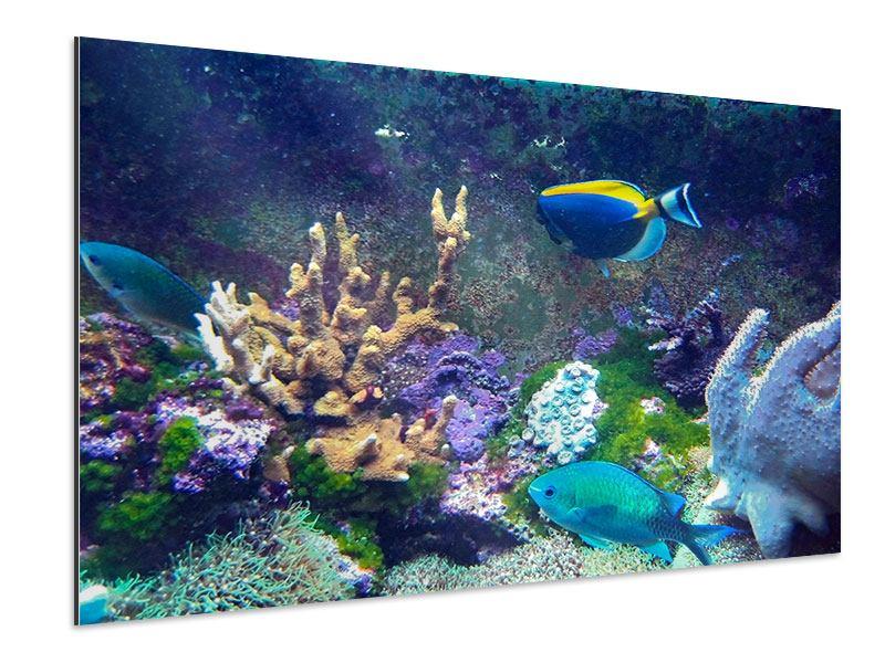 Aluminiumbild Fische