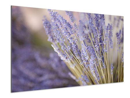 Aluminiumbild Lavendel XXL