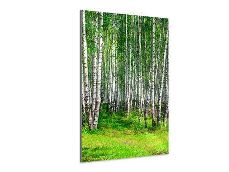 Aluminiumbild Der Birkenwald im Sommer