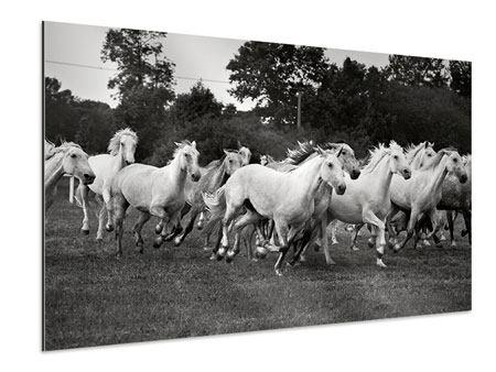 Aluminiumbild Die Mustang Herde