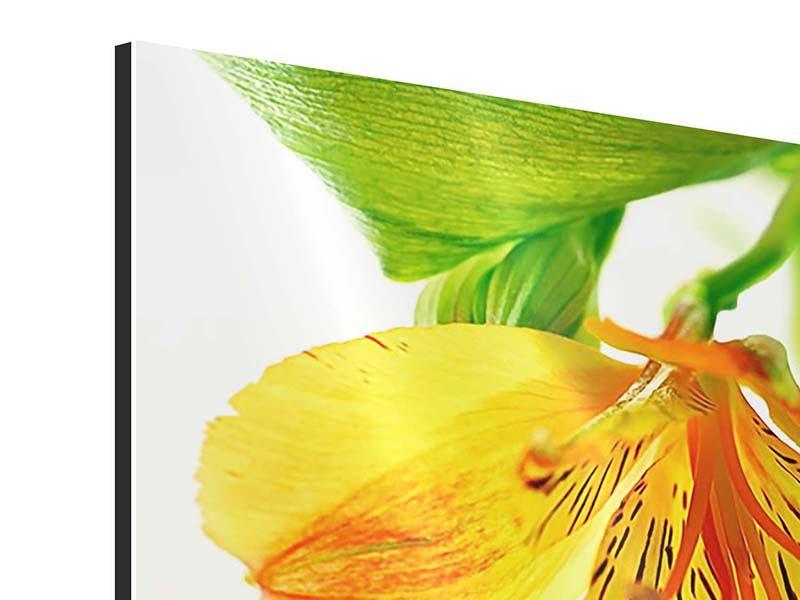 Aluminiumbild Fliessende Orchideenblüte