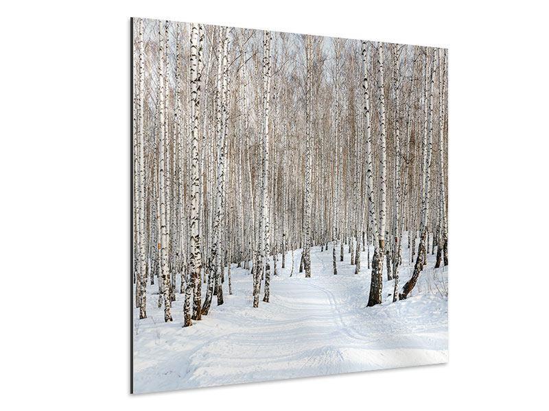 Aluminiumbild Birkenwald-Spuren im Schnee