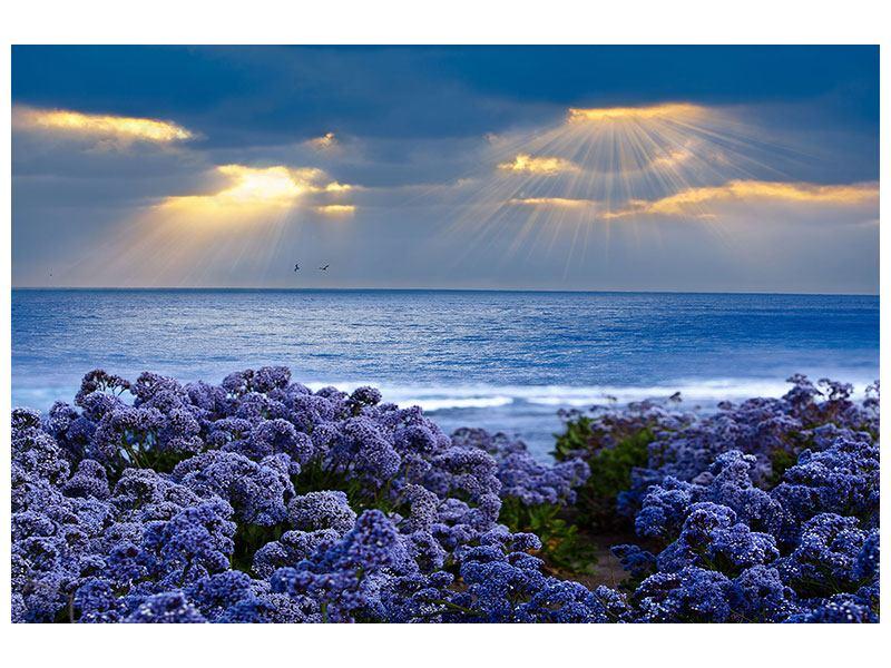 Aluminiumbild Der Lavendel und das Meer