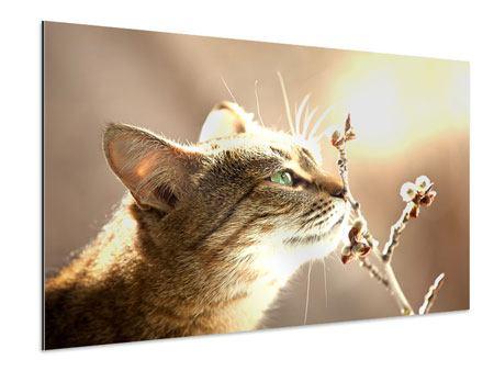 Aluminiumbild Die Katze