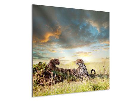 Aluminiumbild Geparden