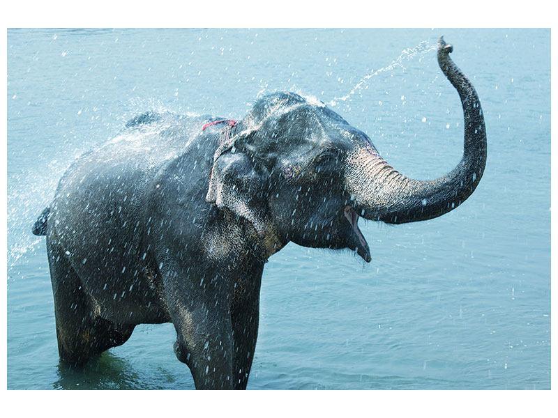 Aluminiumbild Der junge Elefant