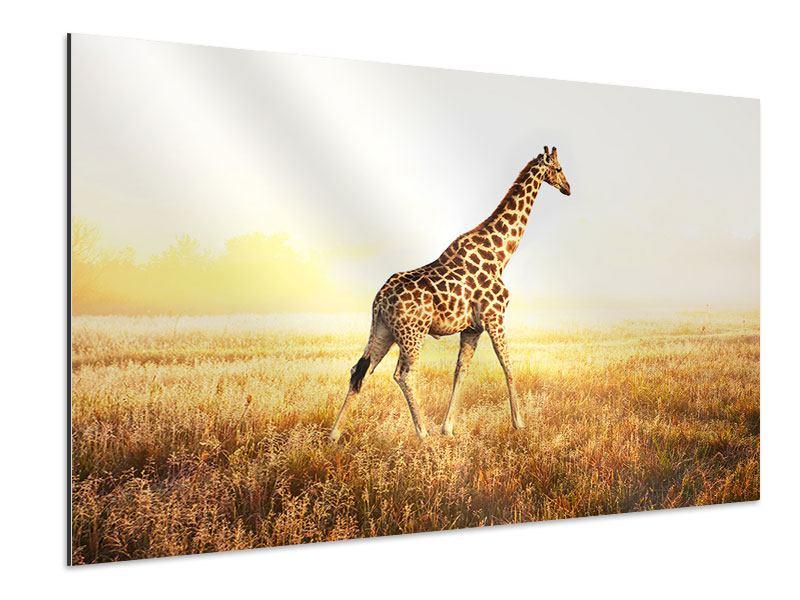 Aluminiumbild Die Giraffe