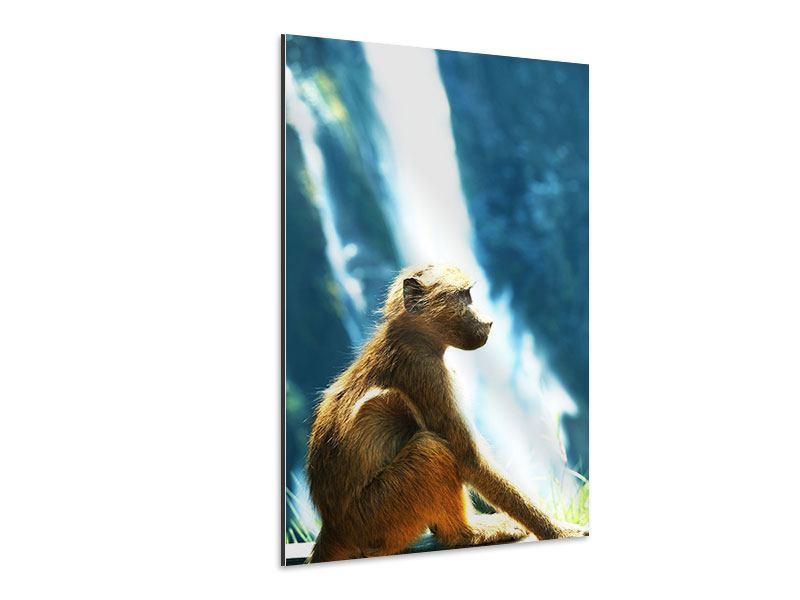 Aluminiumbild Der Primat
