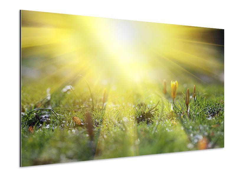 Aluminiumbild Blumige Wiese