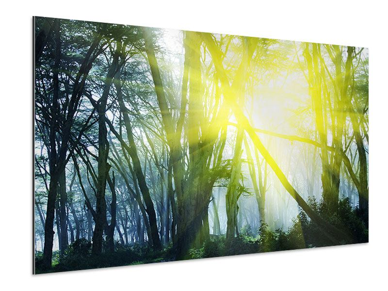 Aluminiumbild Sonnenstrahlen im Wald