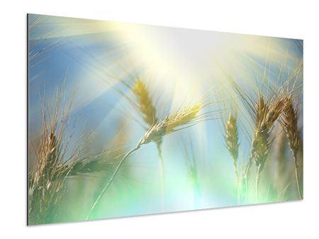 Aluminiumbild König des Getreides